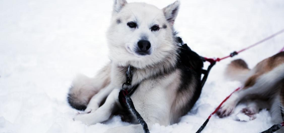 Dog Sledding with Lunch Small Group Tour